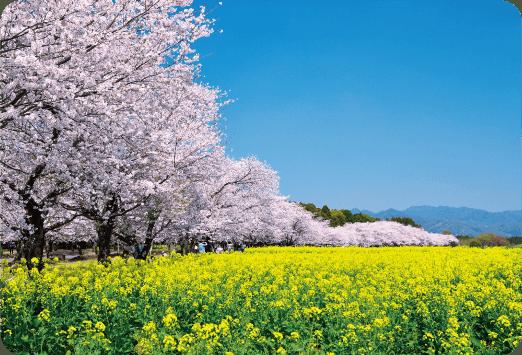 木花開耶姫の物語