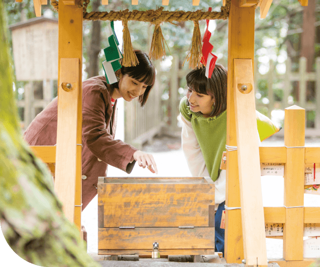 高千穂神社 夫婦杉
